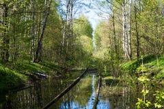 被放弃的铁路在森林里 图库摄影