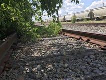 被放弃的铁路的植物 库存照片