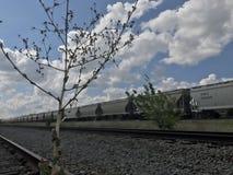 被放弃的铁路 库存图片