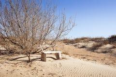 被放弃的长凳 库存图片
