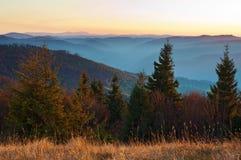 被日光照射了云杉,反对发烟性山脉的杉树 免版税库存图片