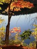 被日光照射了五颜六色的秋叶 图库摄影