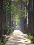 被日光照射了公园的路径 免版税图库摄影