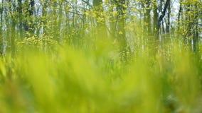 被日光照射了春天林木离开绿草 股票视频