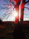 被日光照射了树 免版税库存照片