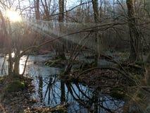 被日光照射了沼泽 库存图片
