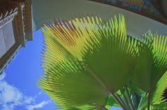 被日光照射了爱好者棕榈叶在一个拱道在街市檀香山 免版税库存图片