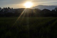 被日光照射了玉米田在乡区 免版税库存图片