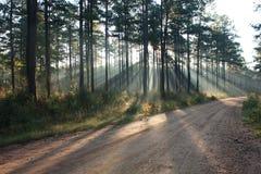 被日光照射了的土路 免版税库存图片