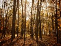 被日光照射了的森林 免版税库存照片