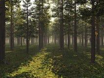 被日光照射了的森林 库存例证
