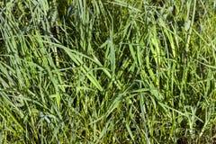 被日光照射了的草绿色 库存照片