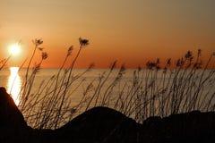 被日光照射了的草 库存照片