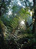 被日光照射了的蕨 库存照片