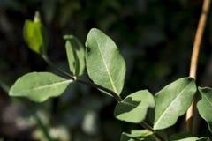 被日光照射了绿色叶子在春天 库存照片