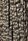 被日光照射了被烧的被烧焦的木纹理 库存图片
