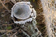 被日光照射了被霜蒙着的树桩 免版税库存图片