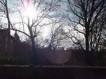 被日光照射了结构树 免版税图库摄影