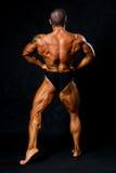 被晒黑的爱好健美者显示胳膊和返回的肌肉 库存照片