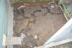 被暴露的鼠跑在鸟舍焊接滤网地板下 免版税库存照片