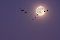 被月光照亮的迁移 免版税库存照片