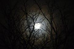 被月光照亮结构树 免版税库存照片