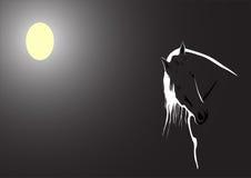 被月光照亮黑色的马 免版税库存图片