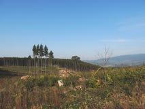 被杀死的森林 库存图片