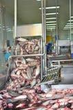 被杀死的pangasius鲶鱼转移到下条生产流水线在越南的湄公河三角洲的海鲜工厂 库存图片
