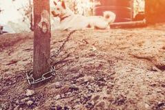 被束缚的狗照片  免版税库存照片