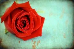 被构造的变老的grunge玫瑰 免版税库存照片