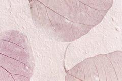 被构造的叶子纸紫色 免版税库存图片