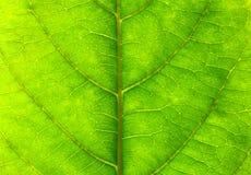 被构造的叶子 免版税库存照片