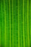 被构造的叶子 免版税图库摄影