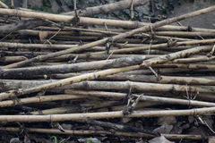 被构造的竹子 免版税图库摄影