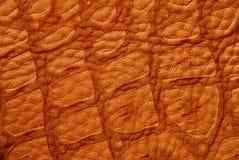 被构造的鳄鱼皮革 库存图片