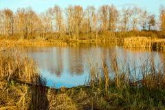 被染黄的木头的Forest湖 库存图片