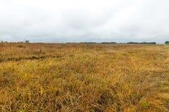 被染黄的草,秋天 免版税库存图片