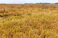 被染黄的草,秋天 库存照片