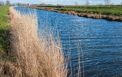 被染黄的芦苇和一条蓝色反射的小河 免版税库存图片