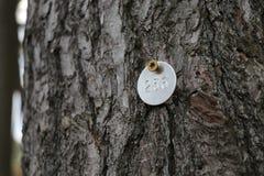 被标记的杉树 库存照片