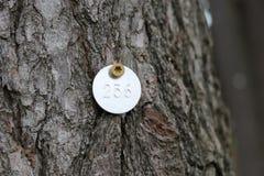 被标记的杉树 库存图片