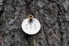 被标记的杉树 免版税库存照片