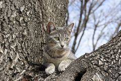 被栖息的树猫 免版税库存照片