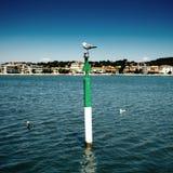 被栖息的海鸥 库存照片