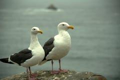 被栖息的海鸥 免版税库存图片