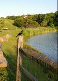 被栖息的美洲红翼鸫 免版税图库摄影