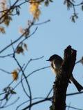 被栖息的鸟分行 库存图片