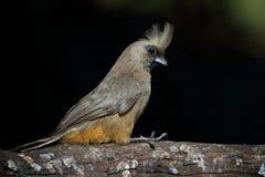 被栖息的鸟分行 免版税库存照片