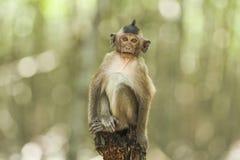 被栖息的猴子 免版税库存图片